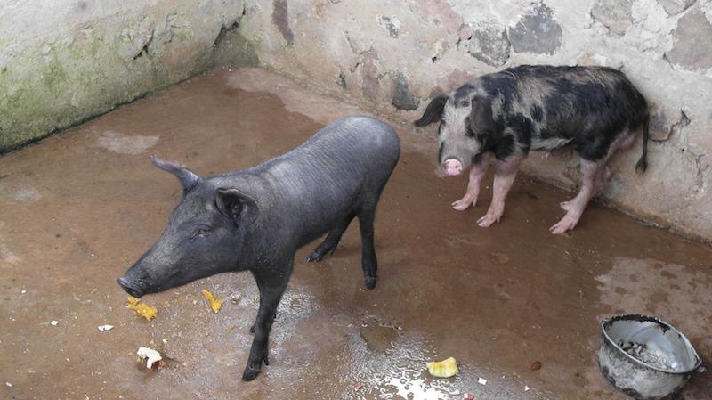 13-03-jeme-schweinestall