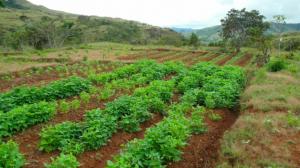 Ein ehemaliges Reisfeld, das heute mit verschiedenen Feldfrüchten bewirtschaftet wird