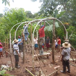 Bau der Baumschule